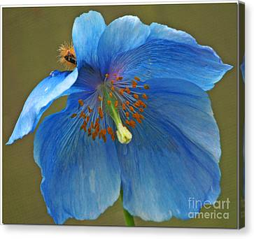 Canvas Print featuring the photograph Blue Poppy by Chris Anderson
