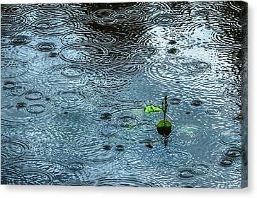 Blue Rain - Featured 3 Canvas Print