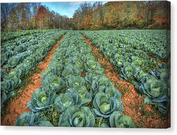 Blue Ridge Cabbage Patch Canvas Print by Jaki Miller