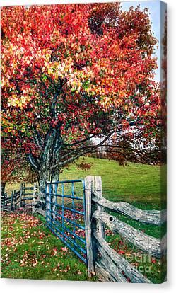 Blue Ridge - Fall Colors - Autumn Maple Tree Fence Gate I Canvas Print by Dan Carmichael