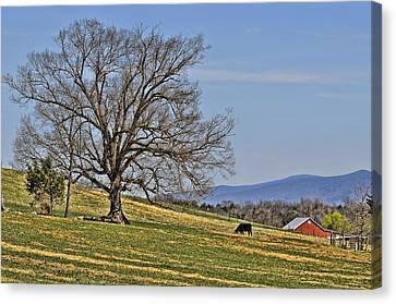 Blue Ridge Farm Canvas Print