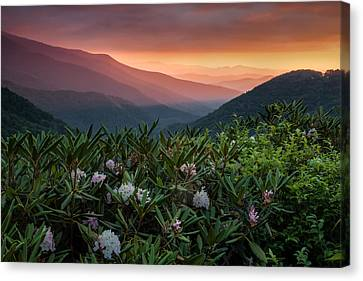 Blue Ridge Morn With Rose Bay Rhododendron  Canvas Print by Rob Travis