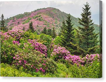 Blue Ridge Mountain Rhododendron - Roan Mountain Bloom Extravaganza Canvas Print by Bill Swindaman