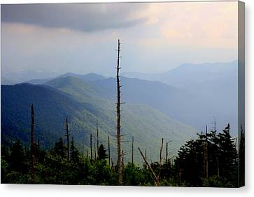 Wind Blown Tree Canvas Print - Blue Ridge Mountains by Karen Wiles