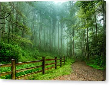 Blue Ridge Parkway - Foggy Country Road And Trees II Canvas Print