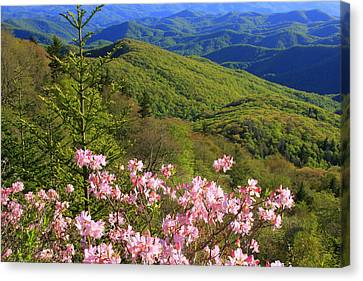 Blue Ridge Parkway Rhododendron Bloom- North Carolina Canvas Print by Mountains to the Sea Photo