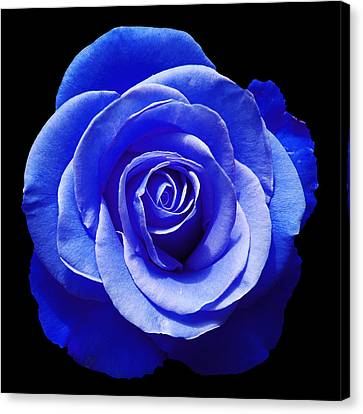 Blue Rose Canvas Print by Aimee L Maher Photography and Art Visit ALMGallerydotcom