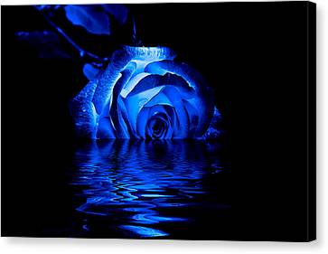 Blue Rose Canvas Print by Doug Long