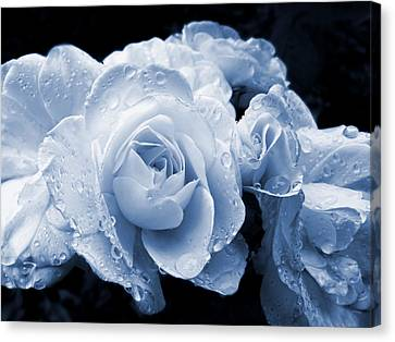 Blue Roses With Raindrops Canvas Print by Jennie Marie Schell