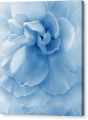 Blue Begonia Canvas Print - Blue Ruffled Begonia Flower by Jennie Marie Schell