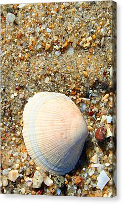 Canvas Print featuring the photograph Blue Shell by Dick Botkin
