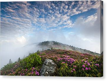 Blue Skies Above Catawba Rhododendron In The Roan Mountain Highlands Canvas Print by Mark VanDyke
