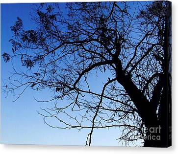 Canvas Print featuring the photograph Blue Sky by Andrea Anderegg