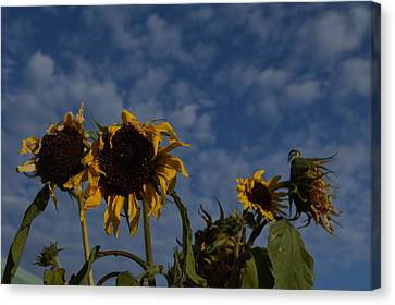 Canvas Print featuring the photograph Blue Sky Buddies by Brian Boyle