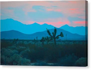 Blue Sky Cacti Sunset Canvas Print