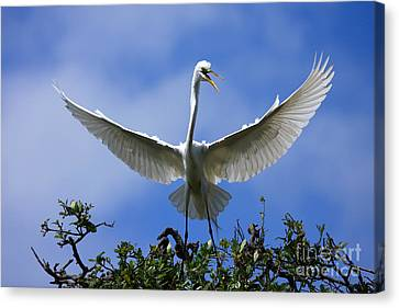 Blue Sky Landing Canvas Print