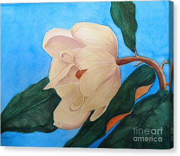 Canvas Print featuring the painting Blue Sky Magnolia by Nancy Kane Chapman