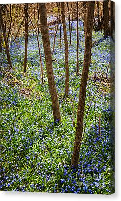 Blue Spring Flowers In Forest Canvas Print by Elena Elisseeva