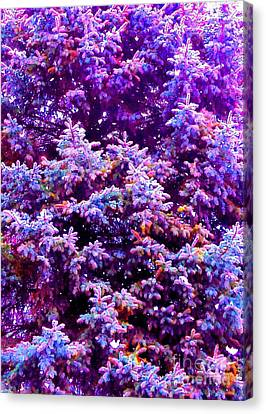 Blue Spruce In The Snow Canvas Print by Ann Johndro-Collins
