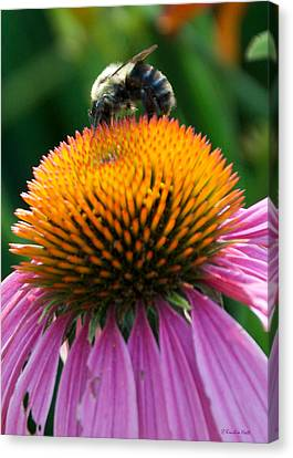 Blue Striped Bee Canvas Print