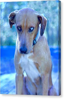 Blue Sulking Canvas Print by Delilah Downs