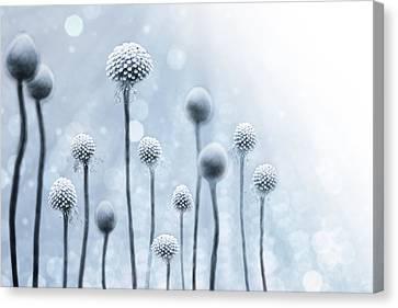Blue Sunshine Canvas Print by Lisa Knechtel