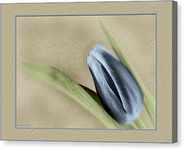 Blue Tulip Canvas Print by Philip  Butler