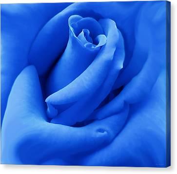 Blue Velvet Rose Flower Canvas Print by Jennie Marie Schell