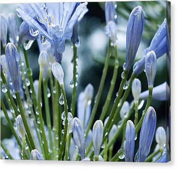 Canvas Print featuring the photograph Blue Water Drops -3  by Haleh Mahbod