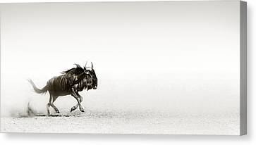 Blue Wildebeest In Desert Canvas Print by Johan Swanepoel