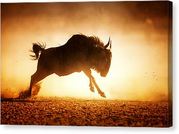 Blue Wildebeest Running In Dust Canvas Print by Johan Swanepoel