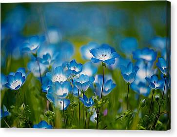 Blue Wildflower Canvas Print by Lanjee Chee