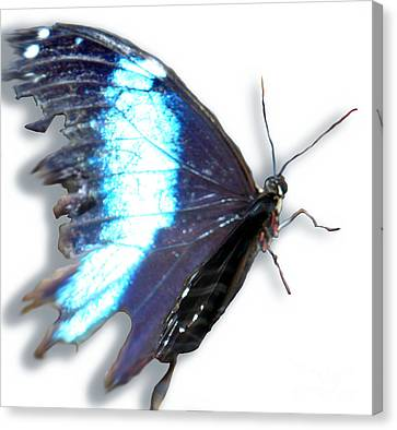 Blue Winged Thing Canvas Print by Kryztina Spence