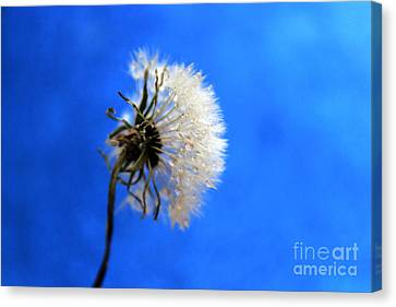Blue Wish Canvas Print by Krissy Katsimbras