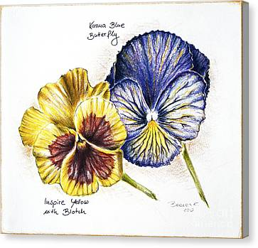 Blue Yellow Pansies Canvas Print