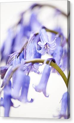 Close Focus Floral Canvas Print - Bluebell Abstract II by Anne Gilbert