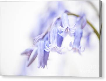 Close Focus Floral Canvas Print - Bluebell Abstract IIi by Anne Gilbert