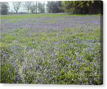 Canvas Print featuring the photograph Bluebell Fields by John Williams
