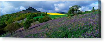 Bluebell Flowers In A Field, Cleveland Canvas Print by Panoramic Images