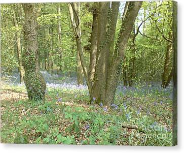 Canvas Print featuring the photograph Bluebell Wood by John Williams