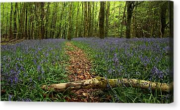 Bluebell Woods Canvas Print by Peter Skelton