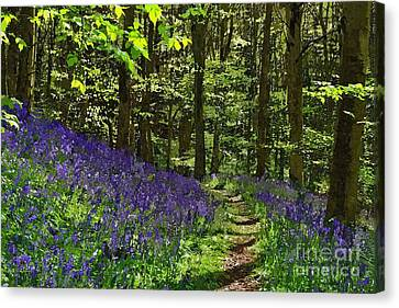 Bluebell Woods Photo Art Canvas Print