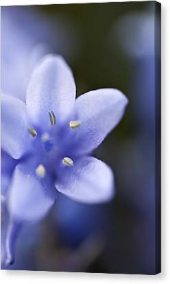 Bluebells 4 Canvas Print by Steve Purnell