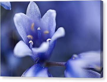 Bluebells 6 Canvas Print by Steve Purnell
