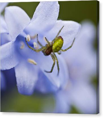 Bluebells 7 Canvas Print by Steve Purnell