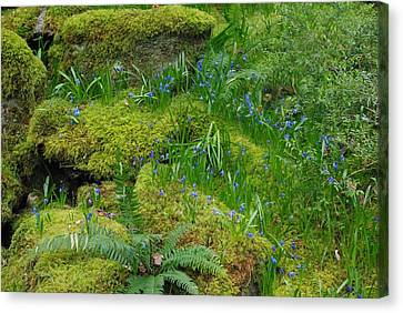 Canvas Print featuring the photograph Bluebells  by Marilyn Wilson