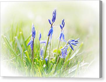 Bluebells On The Forest Canvas Print by Natalie Kinnear