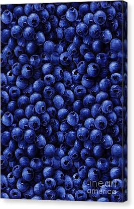 Blueberries In Fabric - Quiltmaker - Seamstress Canvas Print