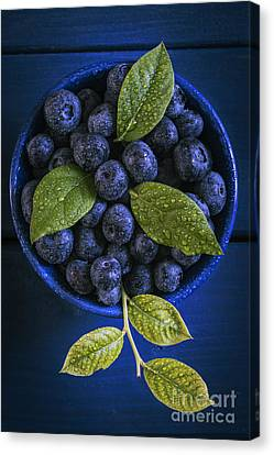 Blueberries Still Life Canvas Print