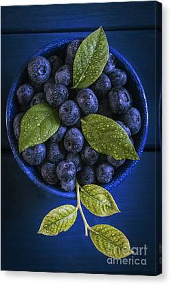 Blueberries Still Life Canvas Print by Vishwanath Bhat